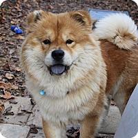 Adopt A Pet :: Kailey - Tucker, GA