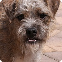 Adopt A Pet :: Willy - Torrance, CA