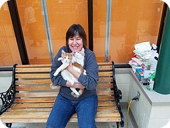 Domestic Mediumhair Kitten for adoption in Elyria, Ohio - Snuggles & Skitty