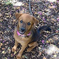 Adopt A Pet :: Celeste - Longview, TX