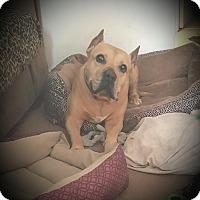 Adopt A Pet :: Mjae - Tallahassee, FL