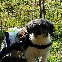 Adopt A Pet :: Reeves - Houston, TX