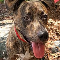 Adopt A Pet :: Mocha - Key Largo, FL