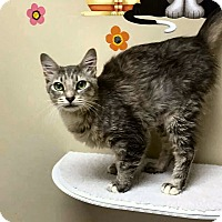 Adopt A Pet :: Gemma - Jacksonville, FL