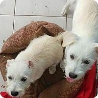 Adopt A Pet :: Kiara and Nala - Danbury, CT