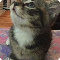 Adopt A Pet :: Opal - Flushing, MI
