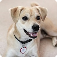 Adopt A Pet :: ***Courtesy Listing  -  MasonB - Minneapolis, MN