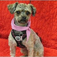 Adopt A Pet :: DAISY - Eden Prairie, MN
