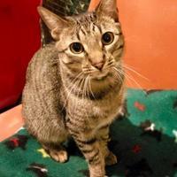 Adopt A Pet :: Linus - Boonville, MO
