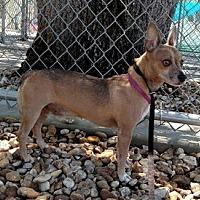 Adopt A Pet :: Matt - Sanford, FL