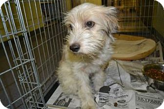 Terrier (Unknown Type, Small) Mix Dog for adoption in Edwardsville, Illinois - Aurora