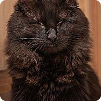 Adopt A Pet :: Harmony (and Ebony) - San Rafael, CA