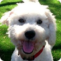Adopt A Pet :: JayJay - La Costa, CA