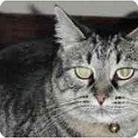 Adopt A Pet :: Milly - Pasadena, CA