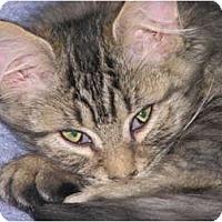 Adopt A Pet :: Twister - Richfield, OH