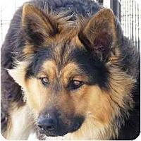 Adopt A Pet :: Rocky - YERINGTON, NV