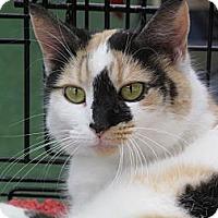 Adopt A Pet :: Sparkles - Port Republic, MD