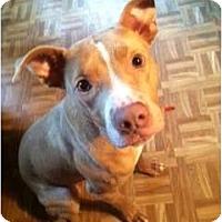 Adopt A Pet :: Freddy - Dallas, PA