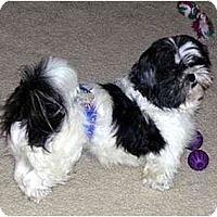 Adopt A Pet :: Eskimo Pie - Dayton, OH