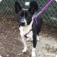 Adopt A Pet :: Timber - New York, NY