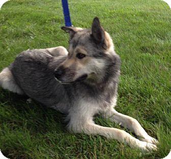 Husky Mix Dog for adoption in LaGrange, Kentucky - Sadie