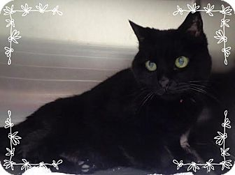 Domestic Shorthair Cat for adoption in Marietta, Georgia - TABITHA