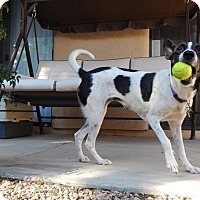Adopt A Pet :: Jitter Bug - Tempe, AZ