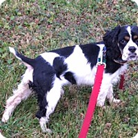 Adopt A Pet :: Charlie - Lewisville, IN