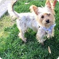 Adopt A Pet :: Charlie - Fremont, CA