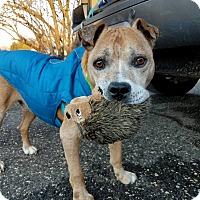 Adopt A Pet :: T-Rex - Shrewsbury, NJ