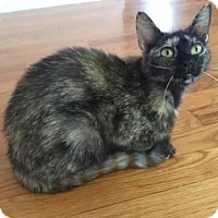 Adopt A Pet :: Maybelle - Marlborough, MA