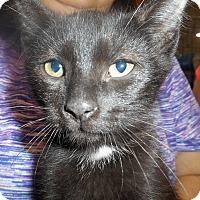 Adopt A Pet :: Jack - Parkton, NC