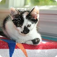 Adopt A Pet :: Bandit - Parkland, FL