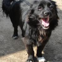Adopt A Pet :: Boots - Fresno, CA