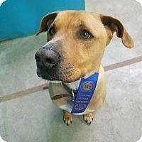 Adopt A Pet :: Keeper - Kansas City, MO
