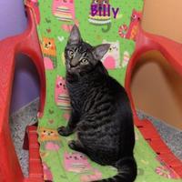 Adopt A Pet :: Billy - Baton Rouge, LA