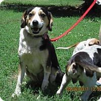 Adopt A Pet :: MADDIE - Williston Park, NY