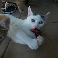 Adopt A Pet :: Shane - Centerton, AR