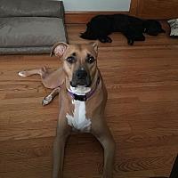 Adopt A Pet :: Chloe - Villa Park, IL