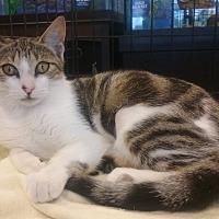 Adopt A Pet :: Miu Miu - West Palm Beach, FL