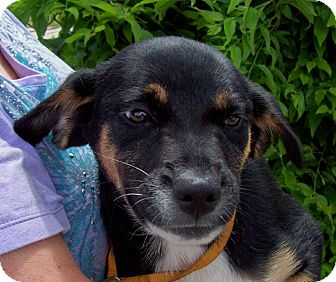 Beagle Mix Puppy for adoption in Bedminster, New Jersey - EMMIE/Summer Special Pricing