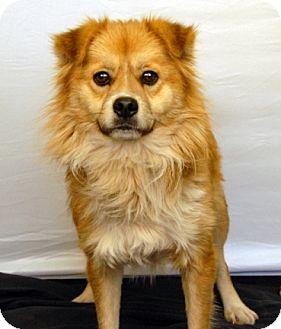 Labrador Retriever/Pug Mix Dog for adoption in Newland, North Carolina - Todd