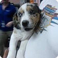 Adopt A Pet :: WHEELS-JJ - Roundup, MT