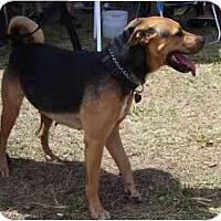 Adopt A Pet :: Sweetie(URGENT)FL. - Miami Beach, FL