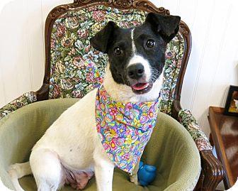 Border Collie/Pointer Mix Dog for adoption in High Point, North Carolina - Dora
