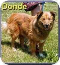 Collie Mix Dog for adoption in Aldie, Virginia - Donde