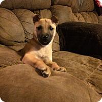 Adopt A Pet :: Jenny - El Campo, TX