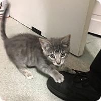 Adopt A Pet :: Bea - Jackson, NJ