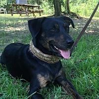 Adopt A Pet :: Taco - Lloyd, FL
