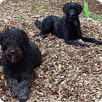 Adopt A Pet :: Thelma and Louise - Alpharetta, GA